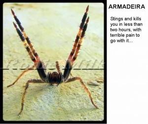 Armadeira-spider