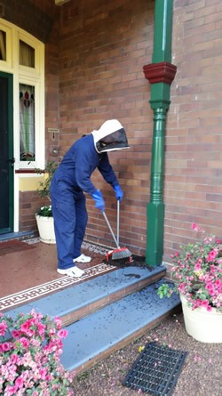 Bee Removal Front of House 4 small