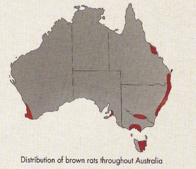 Brown Rats Distibution in Australia
