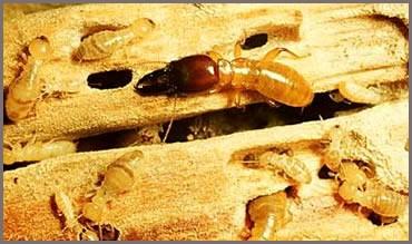 Termite-Ant-Control