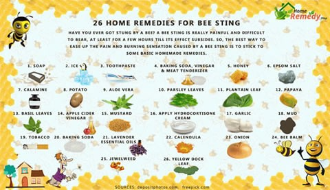 bee-sting-remedies-tip