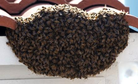 bee-swarm-roof-04-25-2013