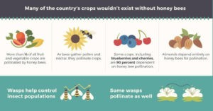 Important facts on bees and wasps