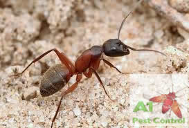 carpenter ant with logo