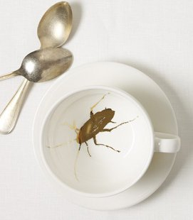 cockroach-cup