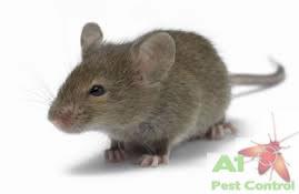 field mouse logo
