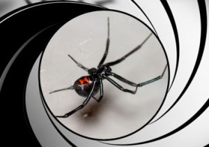 spider-pest-control-treatment-san-diego