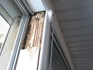 steel-framed-house-termite-damage