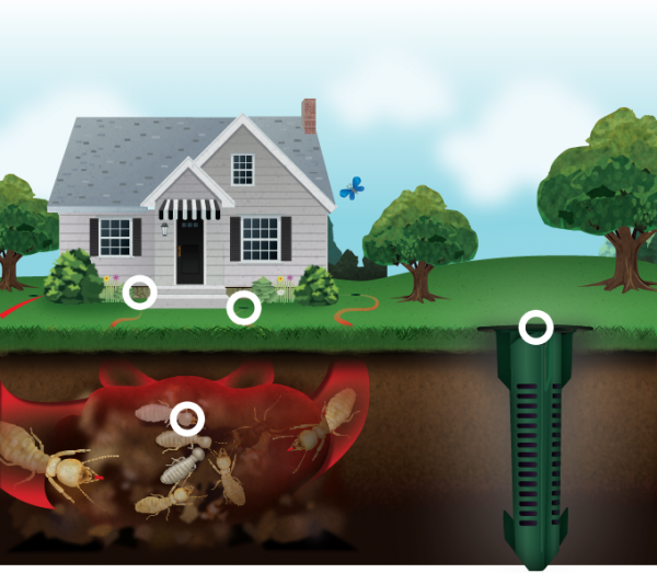 termite-control-hotspots