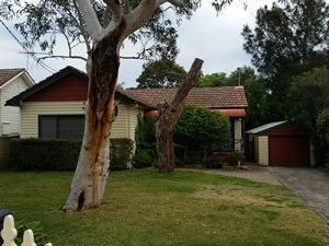Large native trees pose a real termite threat to your house