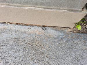 Ants Kellyville