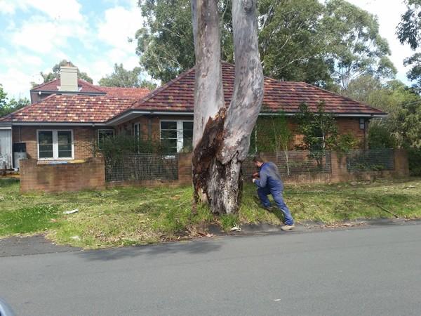 Wahroonga Termite Treatment of Tree