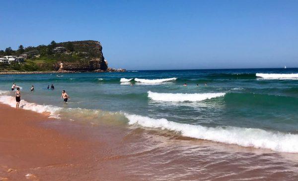 Avalon beach surfers