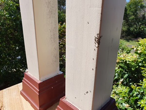ants feeding on bait on a post