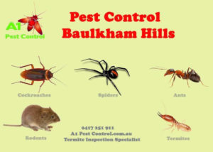 A1 Pest Identification Card Baulkham Hills